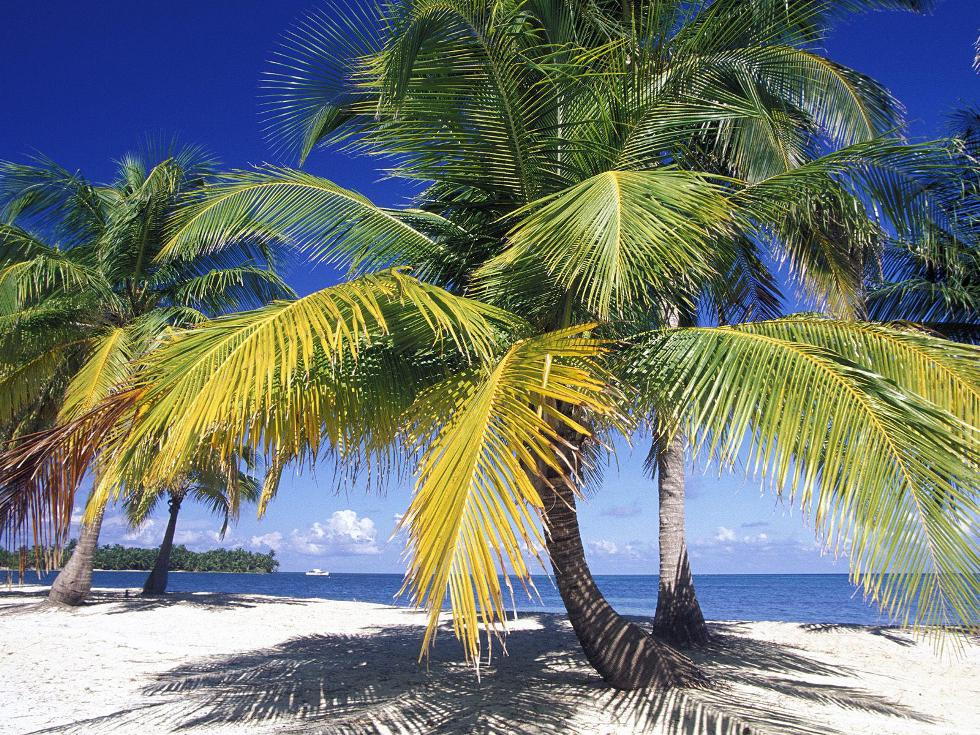 Ambergris Caye The Best Island In The World Caribbean