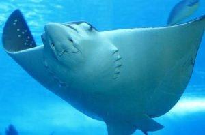 SharkRayAlley